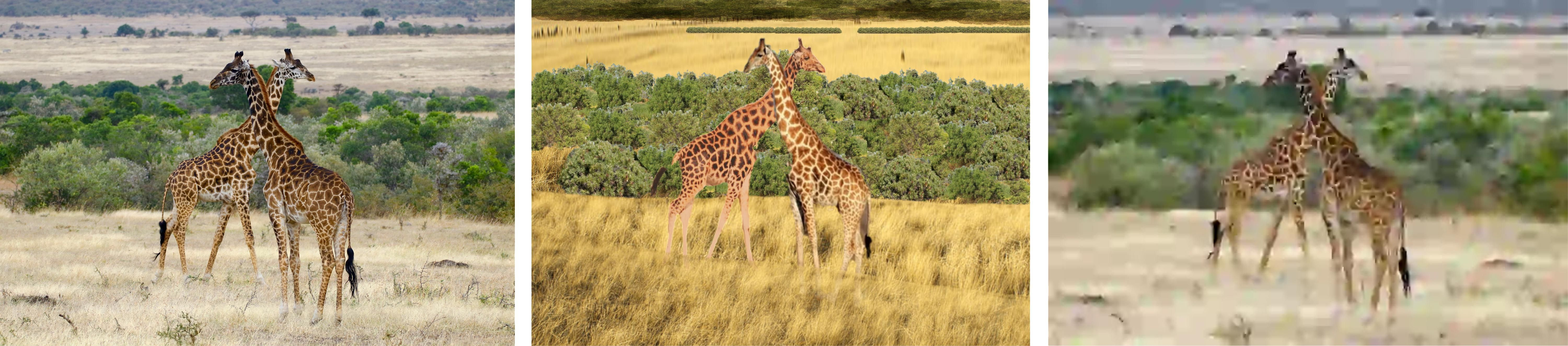 Three images showing two giraffes in each