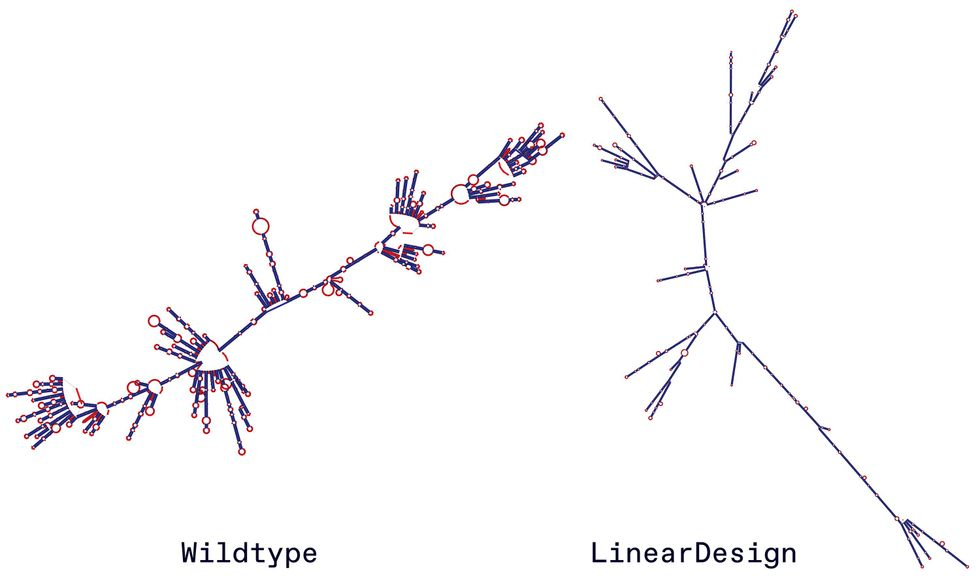 Two illustrations side-by-side showing RNA structures