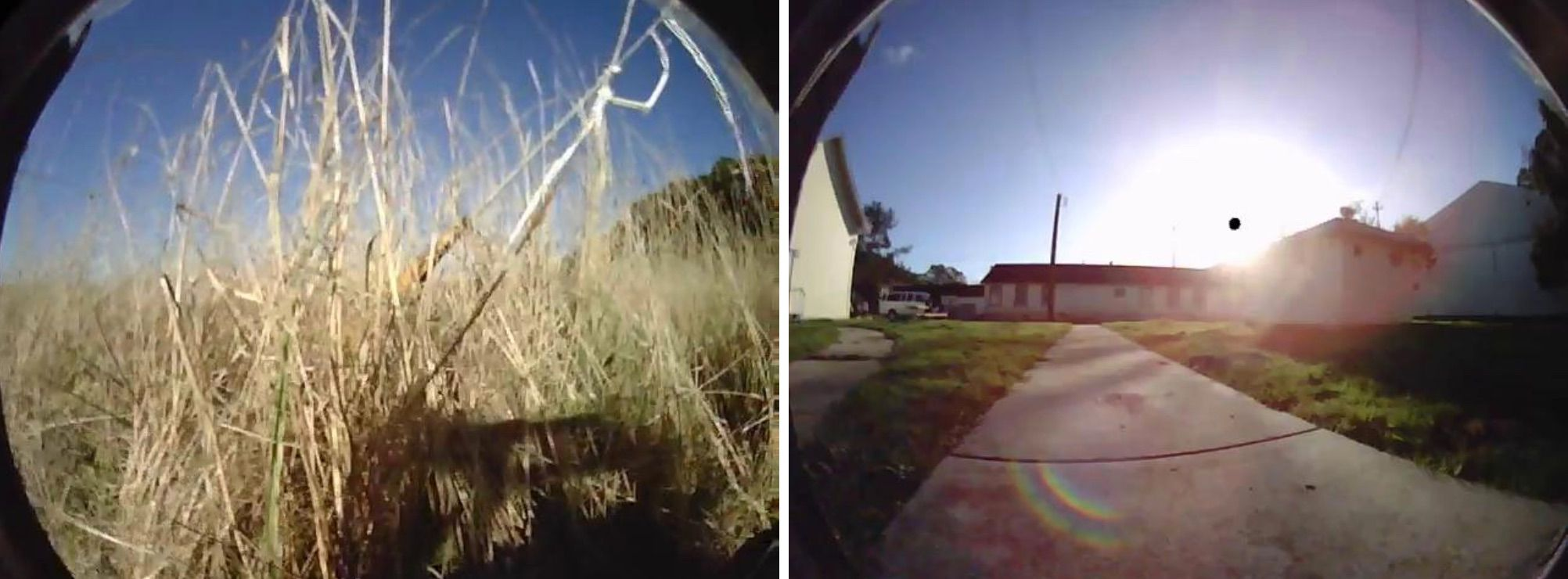 Views of grass and concrete path that UC Berkeley's robot BADGR can learn to navigate on its own